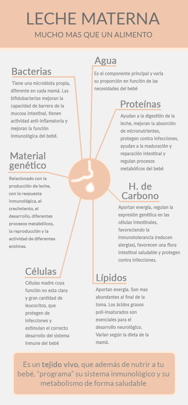 leche materna infografía